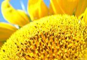 средства защиты растений и посевной материал