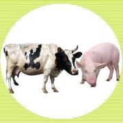 Куплю мясо свинины и говядины,  говядину блочную сорт-высш.,  1-й,  2-й