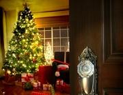 Доставка живых новогодних елок и сосен в дом,  офис
