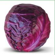 Семена краснокочанной капусты KIOTO F1 / КИОТО F1 (Китано)