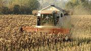 Услуги по уборке зерновых,  подсолнечника,  кукурузы