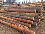 Кругляк лес в Черкассах