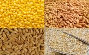 Куплю зернові