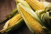 Куплю кукурузу с места.